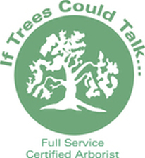 Pinellas County Certified Arborist, Certified Arborist Pinellas County, Pinellas County Arborist, Arborist Pinellas County