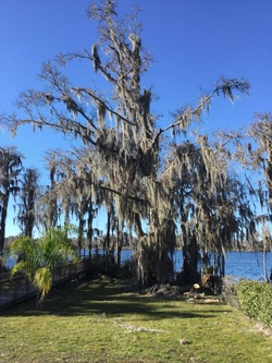 Tree Removal in Pinellas County, Pinellas County Tree Removal, Pinellas County Arborist, Arborist in Pinellas County