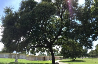 Pinellas County Arborist, Arborist in Pinellas County, Tree Pruning in Pinellas County, Pinellas County Tree Pruning
