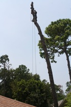 Tree Removal Safety Harbor, Safety Harbor Tree Removal, Tree Service Safety Harbor, Safety Harbor Tree Service