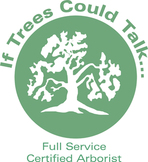 Certified Arborist, Tree Service, Pinellas County Tree Service, Tree Service Pinellas County